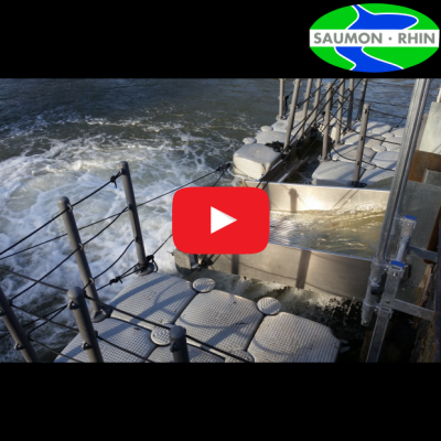 New salmon smolt catch and detection systems in Alsace, France (2019-02-22)