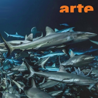 Profish on Arte: A Must-Watch!
