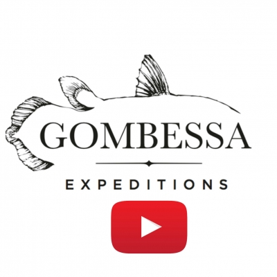 Video: Gombessa IV Genesis-Expedition - Tracking Gray Reef Sharks in French Polynesia (2017-07-03)